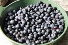 Blueberrys dans une cuvette Photo stock