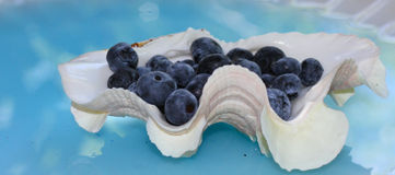 Blueberrys in Seashell-Book Cover. Group of blueberrys in blue water with sunlight in a seashell Stock Photo