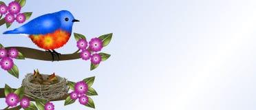 Bluebird και μωρά στη φωλιά Στοκ Εικόνα