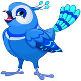 bluebird Foto de archivo