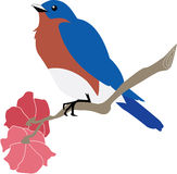 Bluebird on Azalea Branch Stock Images