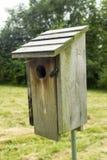 Bluebird dom Out W paśniku Zdjęcie Royalty Free