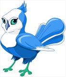 Bluebird royalty free stock photo