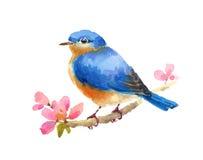 Bluebird Ptasiej akwareli Ilustracyjna ręka Maluję odizolowywam na białym tle ilustracji