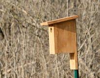 Bluebird pudełko Zdjęcia Stock