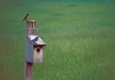 Bluebirds on house stock photography