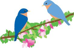 Bluebirds  Stock Images