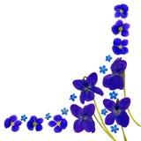 BlueBlossomsCornerWhite Stock Afbeelding