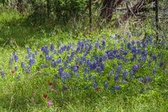Bluebonnet και άλλο Τέξας Wildflowers κοντά στο φράκτη καλωδίων Στοκ Φωτογραφίες