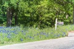 Bluebonnet blooming near mailbox of country house in Texas, America royalty free stock photo