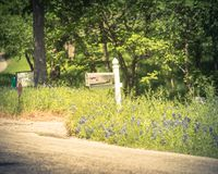 Bluebonnet blooming near mailbox of country house in Texas, America stock photo