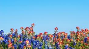 Bluebonnet de Texas e wildflowers do pincel indiano imagem de stock royalty free