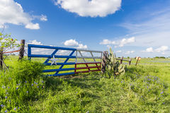 Bluebonnet field in countryside  of Ennis, Texas. Royalty Free Stock Images