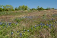 Bluebonnet-Hügel Stockfotografie