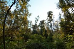Bluebonnet Swamp during the fall. Trees at bluebonnet Swamp during the fall, Baton Rouge, Louisiana, USA stock photo