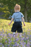 Bluebonnet walker Stock Photography