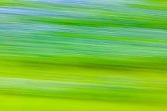 Bluebonnet Wildflower blur Royalty Free Stock Images