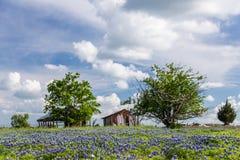 Bluebonnetfält i bygd av Ennis, Texas Arkivfoton