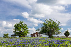 Bluebonnetgebied in platteland van Ennis, Texas Stock Foto's
