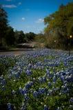 Bluebonnets обочины в Техасе Стоковое Фото