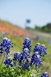 Bluebonnets обочины Стоковое Фото