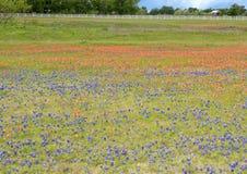 Bluebonnets e pincéis indianos ao longo da fuga do Bluebonnet em Palmer, Texas imagem de stock