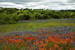 Bluebonnets en Indisch Penseel in Texas Hill Country, Texas royalty-vrije stock afbeeldingen