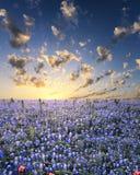 Bluebonnets in het Land van de Heuvel van Texas Royalty-vrije Stock Foto