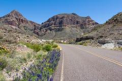 Bluebonnets na curvatura grande, Texas Imagem de Stock