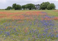 Bluebonnets och indiska m?larpenslar l?ngs Bluebonnetslingan i Palmer, Texas arkivbild