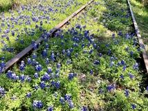 Bluebonnets wśród zaniechanych torów szynowych Zdjęcie Royalty Free