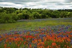 Bluebonnets y brocha india en Texas Hill Country, Tejas imágenes de archivo libres de regalías