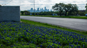 Bluebonnetsfrühjahr Austin Texas Skyline-Hintergrund Stockbild