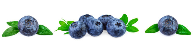 Blueeberries banner Fresh blueberries with leaves in row Royalty Free Stock Photography
