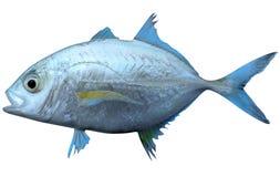 bluefin trevally ilustracja wektor