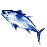 Bluefin tuna fresh isolated on white Royalty Free Stock Photo