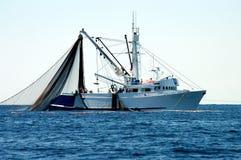 bluefinseinatonfisk Royaltyfri Bild