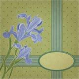 Blueflag花卉框架 免版税图库摄影