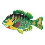 Bluegill Panfish Vector Stock Photo