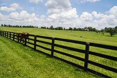 bluegrass肯塔基 免版税库存照片