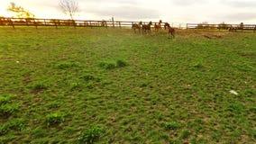 Bluegrass horse farm stock footage