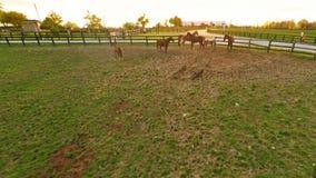 Bluegrass horse farm stock video footage