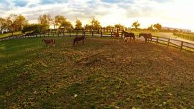 Bluegrass horse farm stock video