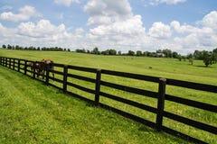 bluegrass Kentucky fotografie stock libere da diritti