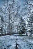 Blueish lekki śnieg w Redmond WA i linia rysująca w śniegu po środku ścieżki między bardzo wysokimi nagimi drzewami obrazy royalty free