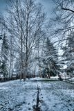 Blueish light snow in Redmond WA and a line drawn in the snow in the middle of a path between very tall bare trees. Blueish light snow in Redmond WA with a line royalty free stock images