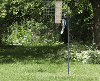 Bluejay on a bird feeder Royalty Free Stock Images