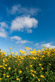 bluen blommar skies under yellow Arkivbild