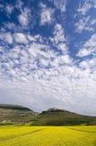 bluen blommar skyyellow Arkivbild