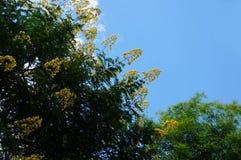 bluen blommar skyyellow Royaltyfri Fotografi